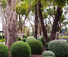 Located on Victoria's Mornington Peninsula, this coastal country inspired garden is full of zen, packed with Australian natives and manicured hedges. Garden Inspiration, Garden Ideas, Landscape Design, Garden Design, Coastal Country, Australian Native Garden, Native Gardens, Rural House, Hedges