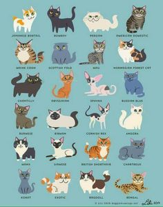 Two of three of my cats are represented here! That has never happened before. Norwegian Forest Cat and Abyssinian.