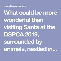 What could be more wonderful than visiting Santa at the DSPCA surrounded by animals, nestled in the picturesque setting of the Dublin mountains? Visit Santa, Santa Letter, Family Christmas, Dublin, Special Gifts, Events, Lettering, Activities, Mountains