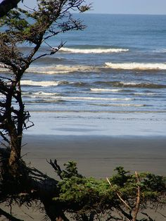 Pacific Beach & Ocean Shores Washington 104