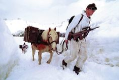 Austrian soldier with Haflinger pack horse travelling through the Alps. Survival Blog, Survival Prepping, Camo Gear, Haflinger Horse, Persuasive Essays, Essay Writing, Survival Equipment, Writing Services, Bradley Mountain
