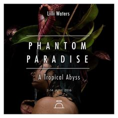 Next up... A Group Show  P H A N T O M  P A R A D I S E  A Tropical Abyss  Featuring the photographic works of Melbourne artist Lilli Waters. Lilli's @lilliwaters work seeks to represent not only an evocative image but a strange and sometimes dark narrative an intermingling of haunting backgrounds and landscapes combined with romantic notions.  #SAINTCLOCHE #PHANTOMPARADISE #LILLIWATERS #photography #tropical #abyss #pitcherplant #paradiseawaits #sydney #paddington by saint_cloche