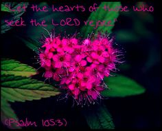 """""""Let the hearts of those who seek the LORD rejoice.""""  (Psalm 105:3)"""