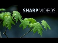 ▶ How to get sharp & detailed videos! DSLR video tutorial - Fenchel and Janisch have some great videos