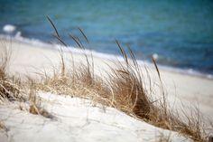 Cape Cod Beach Grass by Chris Seufert, via Flickr