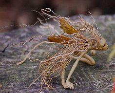 """magickandcrack: """" Chicory Dell Arts's Root Fairy Folk """""""