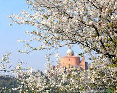 Bologna, Primavera a San Luca, foto di Francesco Malpensi Photography