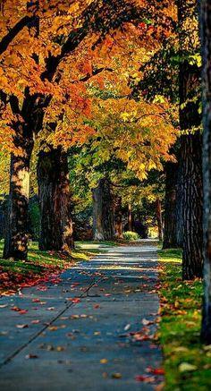 Route vers les parfums d'automne