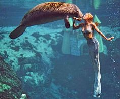 I want to be a mermaid hanging out with a manatee in Weeki Wachi.