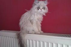 6 aylık kedimize yuva arıyoruz