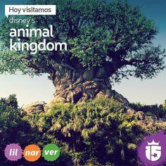 Cambiamos de rumbo y nos vamos a Disney's Animal Kingdom con los grupos #verdeF16 #naranjaF16 #lilaF16!   Un nueva temporada mágica con #enjoy15