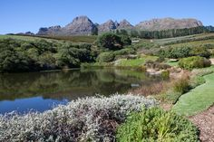 This was our second Hidden Valley Wedding. It certainly is one of the most beautiful Cape wedding venues we've been privileged to photograph a wedding at. Expressions Photography, Wedding Memorial, South Africa, Wedding Venues, Most Beautiful, River, Mountains, Outdoor, Wedding Reception Venues