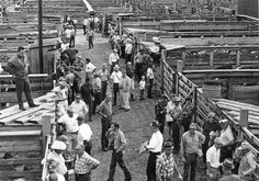 The Sioux City Stockyards, from around 1965.Sioux City Journal Feb 2015.  My grandpa is in the center of the picture.