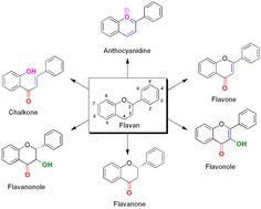 Die Flavonoide sind eine Stoffgruppe innerhalb der sekundären Pflanzenstoffe. Innerhalb der Pflanze treten diese meist als Glycoside auf. Die Aglycone, die sich mit Ausnahme der Isoflavonoide von Flavan ableiten, können jedoch ebenfalls in der Pflanze vorkommen.
