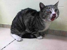 www.PetHarbor.com pet:NWYK1.A1026137 SUPER SUPER URGENT HAS TO BE RESCUED BY TYE END OF THE DAY JAN 23RD