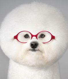 Груминг собак: Секреты стрижек и завязывания бантиков