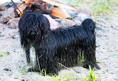 The Beach and your dog.... | Olympic Veterinary Clinic