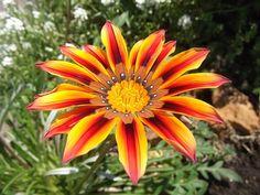 Imagem gratis no Pixabay - Chuva De Flores, Jardim, Luz Do Sol