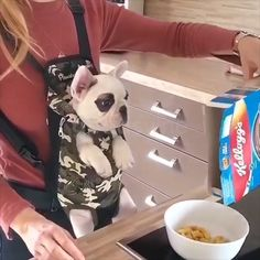 Pet Backpack Bag – Famous Last Words Puppy Carrier, Dog Gadgets, Pet Supplies Plus, Pet Stairs, Pet Gear, Dog Items, Pet Carriers, Outdoor Dog, Dog Accessories