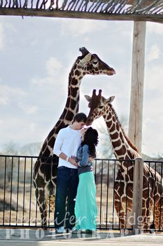 Zoo Engagement Photo, hahaha Jon wants to put a giraffee in a head lock