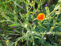 Capturing the Paso Robles Area with My Camera: The Birds, the Bees, and the Flowers on the Snead/Rambouillet Trail
