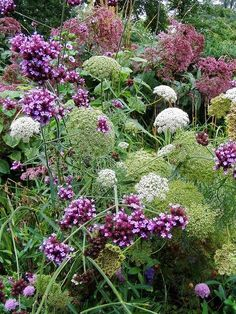 Beautiful late summer garden
