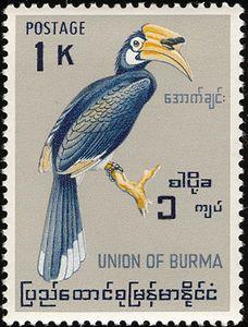 Malabar pied hornbill (Anthracoceros coronatus) Republic of  the Union of Myanmar ( Union of Burma)  Series: Birds. Stamp circa 1964