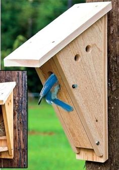 11 Cool Bluebird House Plans To Bring Those Cute Birds To Your Yard. 11 Cool Bluebird House Plans To Bring Those Cute Birds To Your Yard. Bird House Feeder, Bird Feeders, Bluebird House Plans, Bat House Plans, Wood Projects, Woodworking Projects, Woodworking Plans, Bird House Kits, Blue Bird House