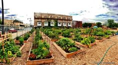The following steps are adapted from the American Community Garden Association's guidelines for launching a successful community garden in your neighborhood.
