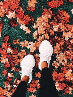 madisonheberlie The post madisonheberlie autumn scenery appeared first on Trendy. Vsco Pictures, Fall Pictures, Pretty Pictures, Halloween Tags, Fall Halloween, Halloween Photos, Nightmare Before Christmas, Autumn Aesthetic, Autumn Scenery