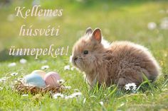"""It will be hard for these cute bunny pictures not to make you """"aww""""! We have floppy-eared cuties, tiny little bunnies, and overall adorable bunny pictures. Take a moment out of your day for a cute animal break. Cute Bunny, Bunny Rabbit, Adorable Bunnies, Easter Gift, Happy Easter, Easter Crafts, Easter Symbols, March Crafts"""