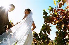 Tara Arrowood's Online Journal - Tara Arrowood's Online Journal - Gutierrez Wedding at SolageCalistoga