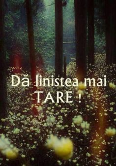 Da linistea mai tare :D Inspirational Quotes About Love, Love Quotes, Funny Quotes, Christ In Me, Just You And Me, Special Quotes, Bible Verses Quotes, Names Of Jesus, True Words