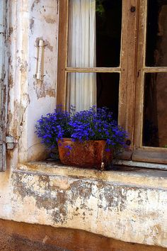 Blue lobelia in a terracota pot on a window sill in Bonneaux, France I LOVE THIS! The pretty flowers and the fabulous aged, shabby window! Window Boxes, Window Sill, Window Ledge, Belle Photo, Windows And Doors, Container Gardening, Outdoor Gardens, Vignettes, Decoration