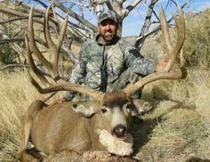 Giant Mule deer buck