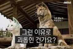 한국의 토종 견 중에는 동경개라는 종이 있다. 꼬리가 짧은 진돗개의 모습을 하고 있는데 그 모습이 일본 신사에 주로 있는 코마이누를 닮았다는 이유로 일제 강점기 때는 학살을 당하기도 했다. 또 일본이 만든 이미지 때문에 재수없는 개라는 편견까지 얻었다.