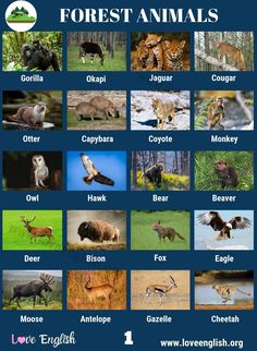 Forest Animals: 40 Common Names of Animals in the Forest - Love English Spanish Grammar, English Vocabulary, English Words, English Language, Teaching English, Learn English, Giant Salamander, Baby Polar Bears, Visual Dictionary