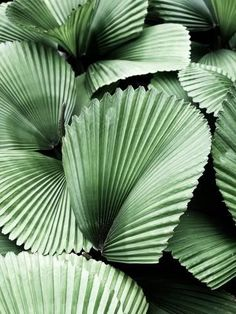 Photographic Print: Tropic Family by SOIL : Plant Aesthetic, Purple Aesthetic, Tropical Leaves, Tropical Plants, Leaf Texture, Nature Plants, Photo Wall Collage, Beautiful Textures, Green Plants