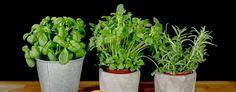 Praktiske råd ved lavFODMAP-diett - Helse Bergen Bergen, Herbs, Plants, Food, Essen, Herb, Meals, Plant, Yemek