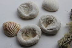 The Imagination Tree: Shell Imprints in Salt Dough! Create some beautiful homemade fossils and nature print keepsakes using shells and easy homemade salt dough! Perfect beach science activity for summer!
