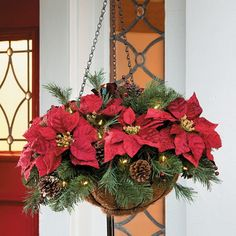 The Cordless Pre-Lit Poinsettia Hanging Basket has 30 warm white LED lights. This outdoor Christmas decoration is quick and easy. Christmas Hanging Baskets, Christmas Planters, Christmas Porch, Outdoor Christmas Decorations, Christmas Holidays, Christmas Wreaths, Christmas Crafts, Family Holiday, Fall Planters
