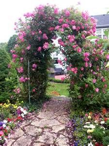 Dede pink climing repeat blooming rose for mothers day I love roses. Garden Paths, Garden Landscaping, Landscaping Ideas, Flowers Perennials, Planting Flowers, Garden Arches, Flower Garden Design, English Country Gardens, Blooming Rose