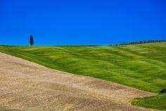 Alone / Solo - A lone cypress over the horizon breaks the textured patterns on a spring tuscan field // Un solitario ciprés rompe la textura de color y geometría de un campo toscano en primavera
