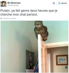 Parce qu'on ne peut pas terminer l'année 2016 sans ça, voici la rétrospective des 20 meilleurs tweets de l'année à propos de chats !