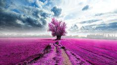 Purple Fields [1920x1080]