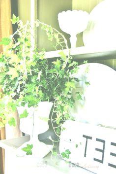 poisonous houseplants - ivy