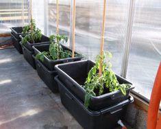 Selvvanningspotter: DIY self watering Self Watering Planter, Diy Planters, Green Garden, Growing Vegetables, Outdoor Spaces, Outdoor Gardens, Plants, Conservatory, Container Gardening