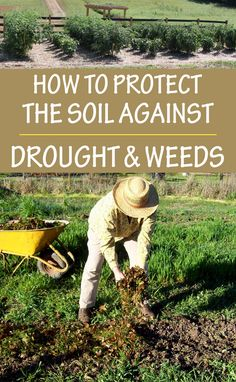 The best shield against drought and weeds: mulching!