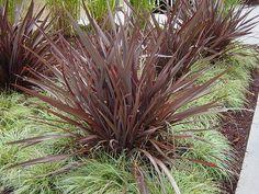 51 Trendy Landscape Ideas New Zealand Front Yards Ornamental Grasses 51 Trendy Landscape Ideas New Z