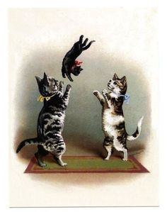 modern-cat-postcard-Maguire-cats-couple-toss-black-kitten-in-air-Early-Training